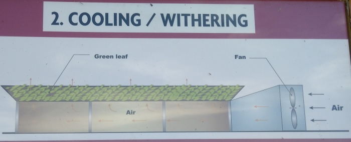 Cooling-Withering