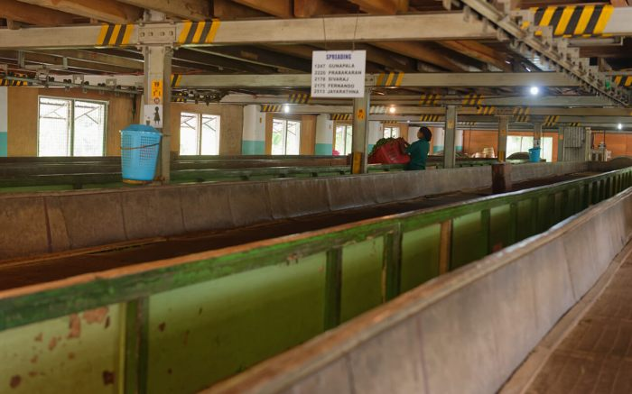 lesterlost-travel-sri-lanka-geragama-tea-factory-troughs-thierry-1